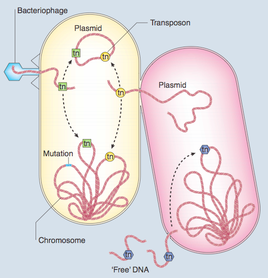 resistência bacteriana 2